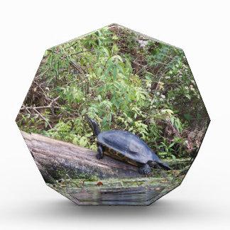 108a turtle award