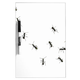 10 ants Dry-Erase boards