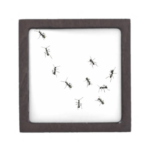 10 ants premium trinket box