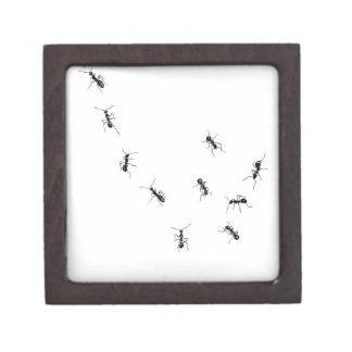 10 hormigas cajas de recuerdo de calidad