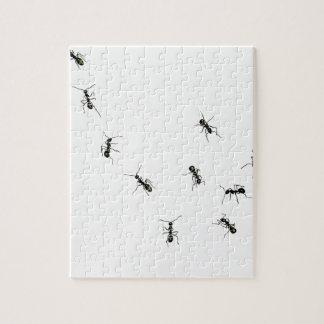 10 hormigas puzzle