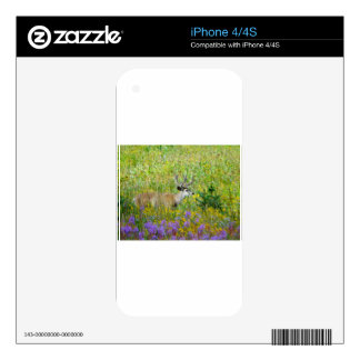 10 Point velvet buck in a field of wildflowers Decal For The iPhone 4