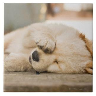 10 week old puppy rubbing its eyes ceramic tile