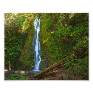 "10"" x 8"", cascada profesional de la foto en bosque cojinete"