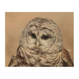 10x8 Barred Owl Wood Wall Decor