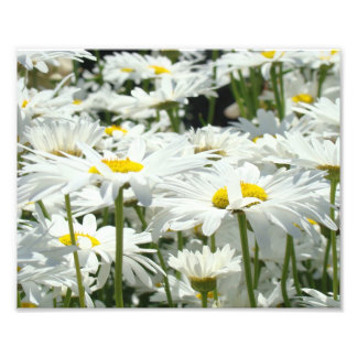 10x8 Photography art prints Daisy Flowers Floral