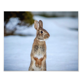 10x8 Rabbit in the snow Photo Print