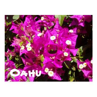 110, Oahu Tarjetas Postales