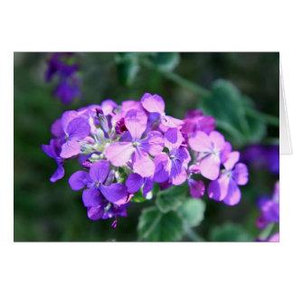 11757 flores salvajes felicitaciones