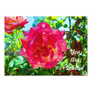 117HD Pink Fusion Rose Card
