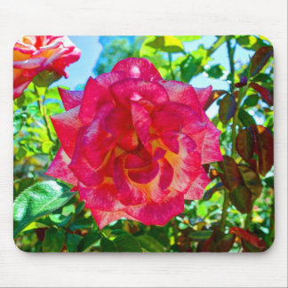117HD Pink Fusion Rose Mouse Pad