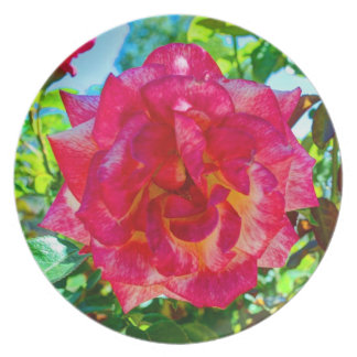 117HD Pink Fusion Rose Dinner Plate