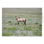11 Mile Wild Horses Greeting Card