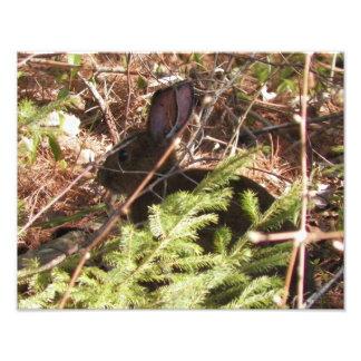 11 x 14  Wild Rabbit in the Bush Photo