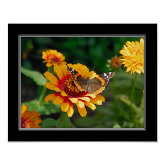 11x14 Indian Blanket Wildflower and Butterfly Poster