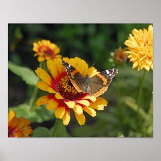 11x14 Indian Blanket Wildflower Poster