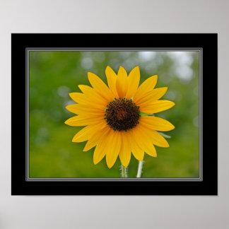 11x14 Single Sunflower Print