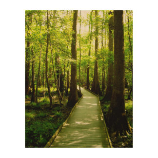 11x14 Wood Canvas - Forest Path Wood Wall Art