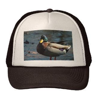 120109-83-AH TRUCKER HATS