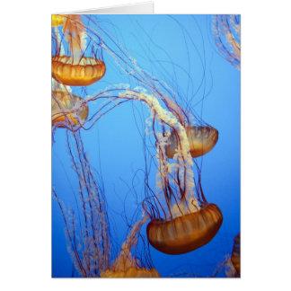 12084 medusas felicitación