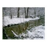 124, hola de Carolina del Norte Tarjetas Postales