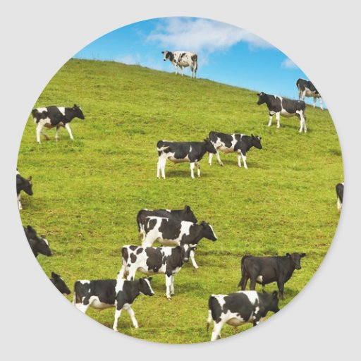 1280-cow-social-network.jpg etiquetas redondas