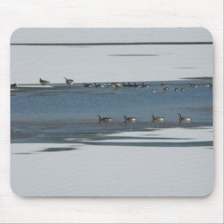 12 12 2008 028 (1) ganso en el lago tapete de ratones