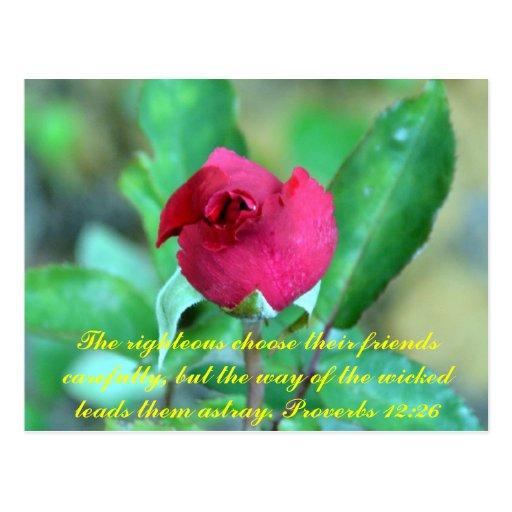 12:26 de los proverbios postal