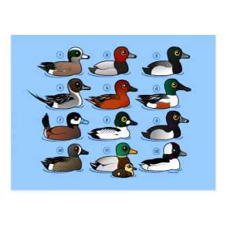 12 Ducks Postcard
