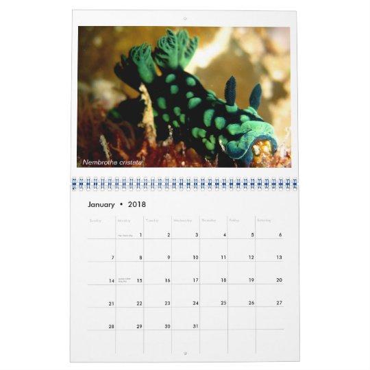 12 month calendar featuring photos of Nudibranchs