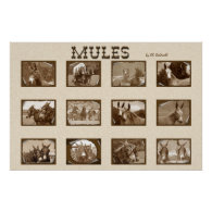 12 Mules Posters