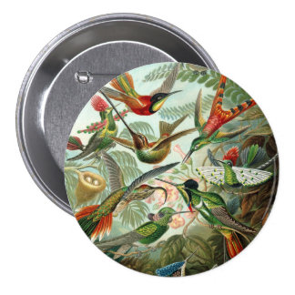 12 pájaros americanos del tarareo crían pintado pin