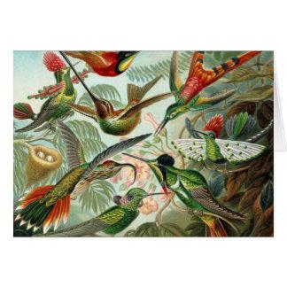 12 pájaros americanos del tarareo crían pintado felicitación