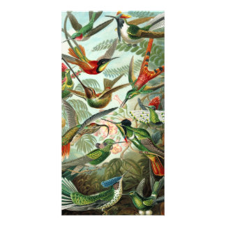 12 pájaros americanos del tarareo crían pintado tarjetas fotograficas