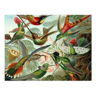 12 pájaros americanos del tarareo crían pintado tarjeta postal