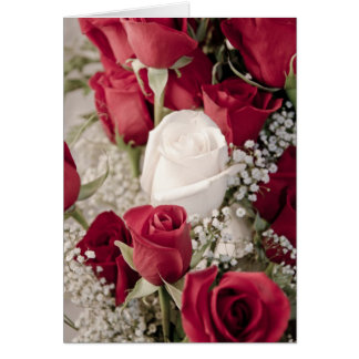 12 red 1 white valentine rosebuds collection card