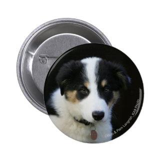 12 Week Old Border Collie Puppy Button
