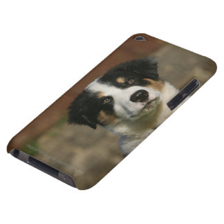 12 Week Old Border Collie Puppy Headshot Barely There iPod Cases