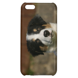 12 Week Old Border Collie Puppy Headshot Case For iPhone 5C