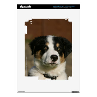 12 Week Old Border Collie Puppy Headshot Decals For iPad 3