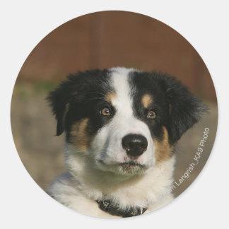 12 Week Old Border Collie Puppy Headshot Round Stickers