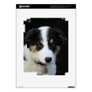 12 Week Old Border Collie Puppy iPad 3 Decal
