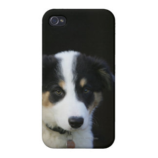 12 Week Old Border Collie Puppy Cases For iPhone 4