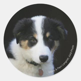 12 Week Old Border Collie Puppy Round Stickers