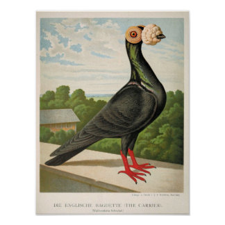 """12"""" x 16"""" Antique pigeon litho  the carrier Poster"""
