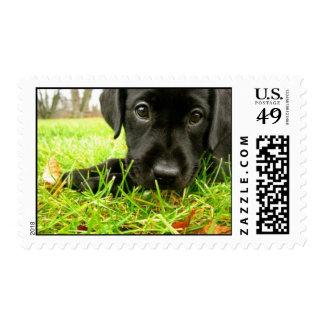 13049_202267587362_649802362_4092483_4635524_n postage stamps