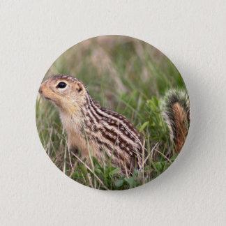 13 stripe ground squirrel button