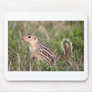 13 stripe ground squirrel mouse pad