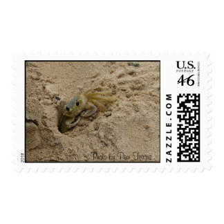 146_4696, Photo by Pam Teague Postage Stamp