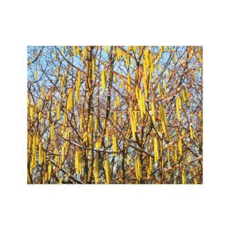 "14"" x 11"" Canvas featuring beautiful Hazel Tree Canvas Print"